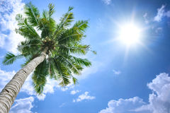 Coconut tree and sun. Coconut tree under blue sky and bright sun Stock Photography