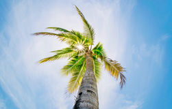 Coconut tree. Sunlight on coconut tree on the beach in summer royalty free stock images