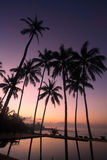 Coconut Tree at sunrise. Silhouette of coconut tree at sunrise Stock Images