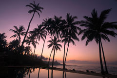 Coconut Tree at sunrise. Silhouette of coconut tree at sunrise Stock Photo