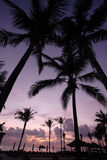 Coconut Tree at sunrise Stock Images