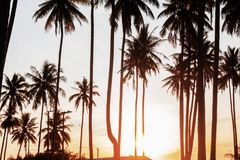 Coconut tree with sunrise. Coconut tree with sunrise at the sea Stock Photos