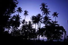 Coconut tree at sunrise - Kao mak, Thailand Royalty Free Stock Photo
