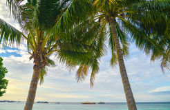 Coconut tree at Sunrise. Thailand Royalty Free Stock Photos