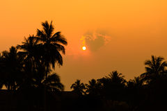 Coconut tree at sunset Stock Photos