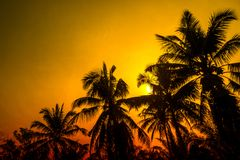 Coconut tree  at sunset abstract spring ,summer nature wallpaper background. Coconut tree  at sunset and golden sky ,abstract spring ,summer nature wallpaper royalty free stock photos