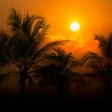 Coconut tree on sunset Stock Photos