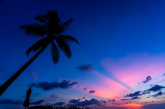 Coconut tree with Sunset silhouette Stock Photo