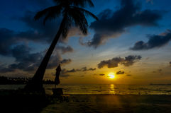 Coconut tree with Sunset silhouette Royalty Free Stock Images