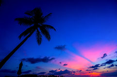 Coconut tree with Sunset silhouette Stock Images