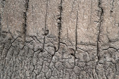 Coconut tree surface. Old wooden surface over time Stock Image