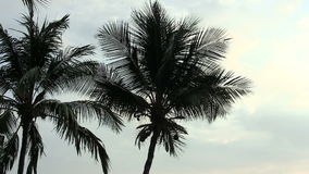 Coconut Tree Tops Silhouetted Against Cloudy Sky Hawaii stock video