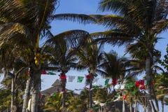 Coconut tree Royalty Free Stock Photos
