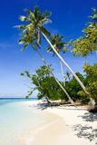 Coconut tree at the tropical beach Stock Image