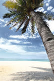 Coconut tree on a tropical beach Stock Photography