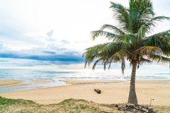 Coconut tree with tropical beach Royalty Free Stock Photo