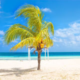 Coconut tree at a tropical beach in Cuba Royalty Free Stock Image