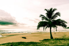 Coconut tree with tropical beach Stock Images