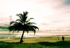 Coconut tree with tropical beach Stock Photography