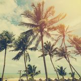 Coconut tree at tropical coast on beach with vintage tone.  Royalty Free Stock Photography