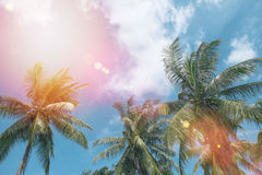 Coconut tree at tropical coast. With vintage tone and flare filtered Stock Image