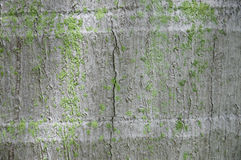 Coconut tree trunk texture background royalty free stock photography