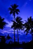 Coconut Tree on Twilight. Coconut Tree on Twilight, Kohchang Island, Thailand Royalty Free Stock Image
