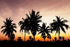 Coconut tree on twilight time Stock Photography