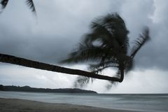 Coconut tree twists when the wind. royalty free stock photos