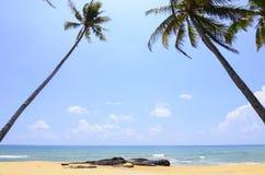 Coconut tree under beautiful blue sky and bright sun. Stock Photo