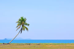 Coconut tree under blue sky at the beach of south china sea with Royalty Free Stock Image