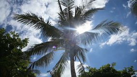 Coconut tree under blue sky and bright sun stock video