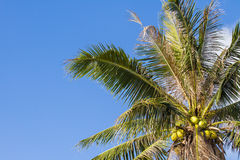 Coconut tree under blue sky and clouds Royalty Free Stock Photo