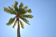 Coconut Tree Under Blue Sky With Copy Space Area. Royalty Free Stock Photos