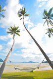 Coconut tree under blue sky with hammock Stock Photography