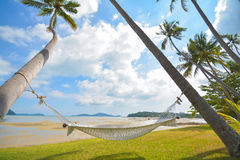Coconut tree under blue sky with hammock Stock Images