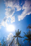 Coconut tree under blue sky. Thailand Stock Image