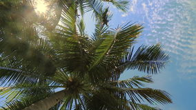 Coconut tree under blue sky stock video