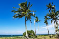 coconut tree under bright sunlight and windy day near the beach Royalty Free Stock Photos