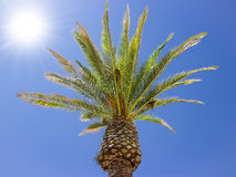 Coconut tree under the wind, blue sky Stock Image