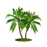 coconut tree vector illustration Stock Photography