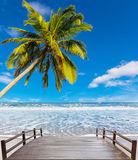 Coconut tree at white beach Stock Images