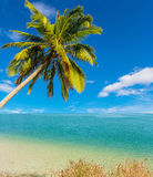 Coconut tree at white beach Royalty Free Stock Image