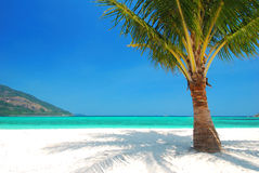 Coconut tree on white sand, blue sky and turquoise sea Stock Photos