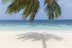 Coconut tree on a white sandy beach and crystal clear water in the Maldives stock photo