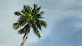 The coconut tree and the wind. Blows the sky as the background stock video