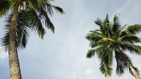 The coconut tree and the wind. Blows the sky as the background stock video footage