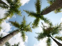 Coconut trees Stock Photography
