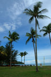 Coconut trees. Against blue skies royalty free stock photos