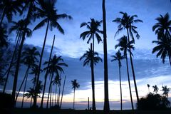 Coconut Trees. At the beach Stock Photos